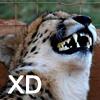 tainry: (cheetah XD by risamitsukai)