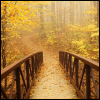 tainry: (fall bridge by ninamazing)
