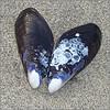 shiratic: (shell with grey border)