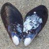 shiratic: (shell)