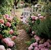 felicita: (blommor by felicita)