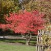 lcohen: (autumn tree)