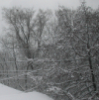 lcohen: (snowy trees)
