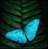 milena_1980: (butterfly)