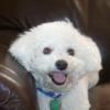 rosieknight: (Doggy grin) (Default)