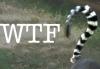 missingopossum: (wtf)