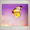 purple_crocus: (butterfly)