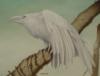 whiteraven191: (Default)