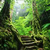 sarantia: (forest staircase roxicons)