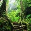 sarantia: (forest staircase roxicons)