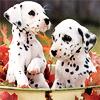 stargatesg1971: (dog-dalmation-puppies)