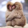 slotava: (две обезьянки)