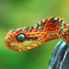 furnaceface: (Snake Its a Snake)