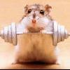 gonzostar: (weightloss - hamster lifting weights)