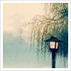 matterandform: ([misc] weeping willow)