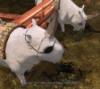 merchant_of_miracles: (unicorns!)