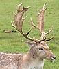 antlers2: (Antlers)