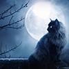 kseenaa: (Cat Magical Moon 2)