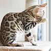 kseenaa: (Cat Wild)