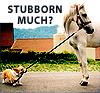 virtualinsomnia: (stubborn (badgerbadger @ LJ))