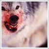 zan: (Basic: Wolf)