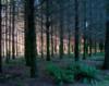 opakele: (Raymond Trees)