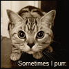 zimtkeks: (Cat - sometimes I purr)