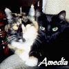 amedia: (cuddle)
