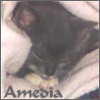 amedia: (Baby Pom)