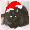 amedia: (Christmas Dabi)