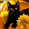 amedia: (Halloween Kitty)