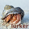 "mergatrude: a hermit crab peering from it's shell with the text ""lurker"" (f/k - duet (text))"