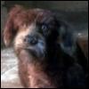satchmoz: (dog, muppet)