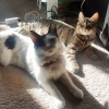 lovelesslybeloved: Photo of my two cats in the sun (Default)