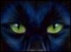 yumeyu: (kitty)