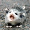 sebenikela: baby opossum yelling (bb possum)