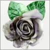 acroamatica: (silverrose)