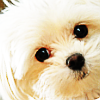 gemspegasus: (puppy)