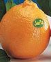 j4: (orange)