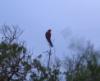 motg: (parrot1)
