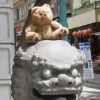 offcntr: (chinatown bear)