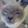 voontah: (Cats: Emmitt)
