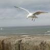flaviomatani: (whitby gull)