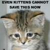 reisha_lynn: (kittens can't save this.)