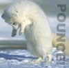 eregyrn: (Arctic Fox - pounce!)