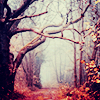 dreamkist: foggy autumn trees on a country road (Default)