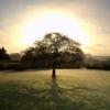 tehomet: (Solstice tree)