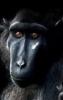 fizzik: (обезьян)