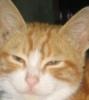 granny1999: (котяра)