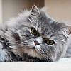 sharp_as_knives: (cat - grumpy awake)
